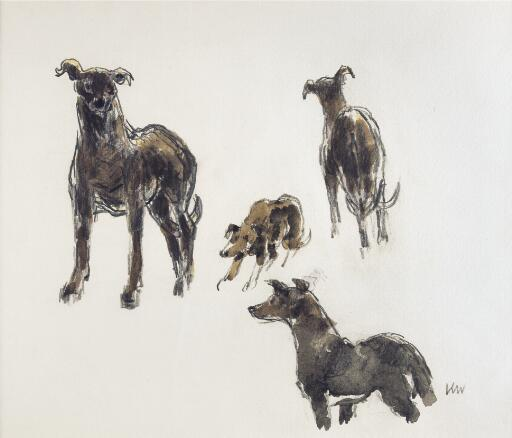 Study of greyhounds