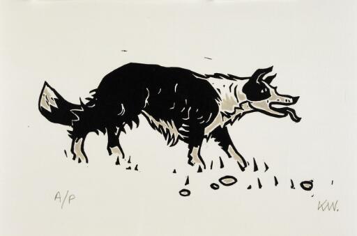 Welsh sheepdog