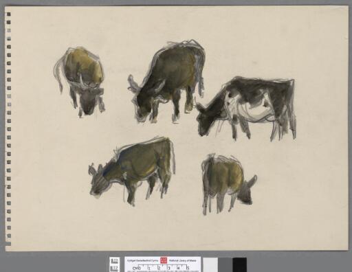 Studies of five cows