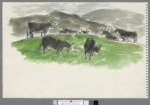 Seven cattle in the mountains