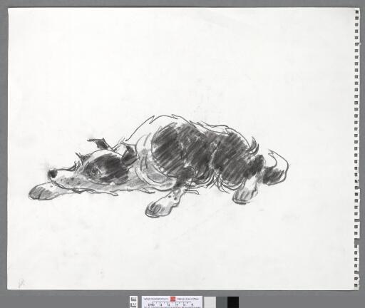 Crouching sheepdog