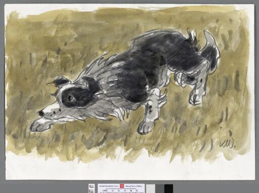 Crouching sheepdog with ochre background