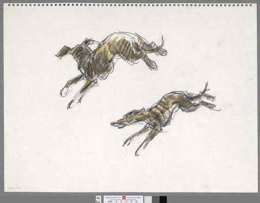 Studies (2) of a greyhound