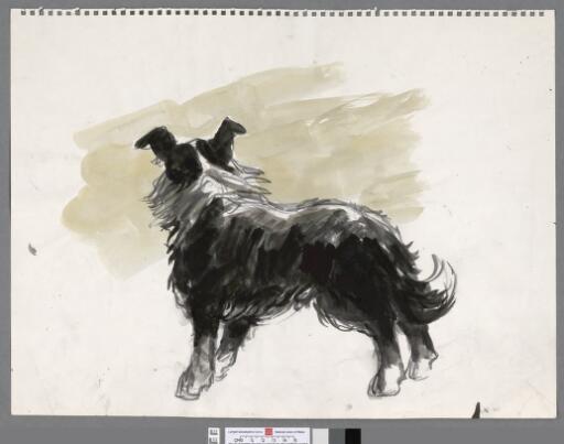 Standing sheepdog