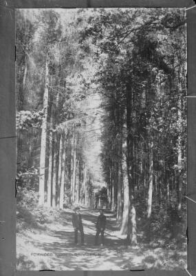 Foxwood Woods, Rhiwderin