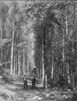 Foxwood Woods, ger Casnewydd