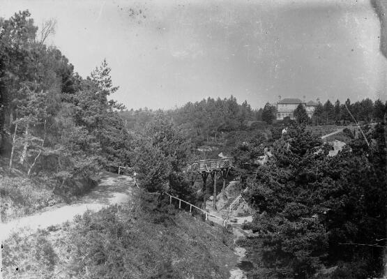 Parkland scene ca.1905