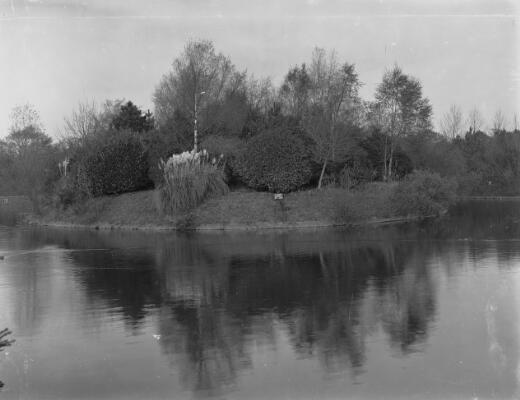 Large Island, Roath Park