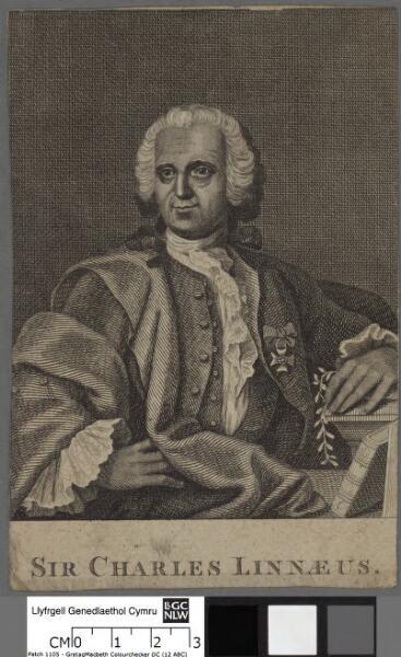 Sir Charles Linnaeus