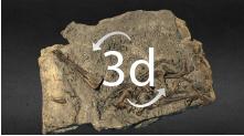 Partial skeleton Dracoraptor hangani