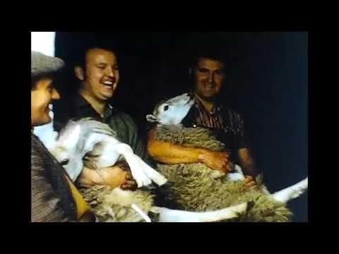 Sheep Shearing at Hendrefydd Farm Ystradfellte