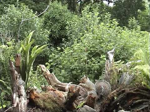 Ceinws:  Nain's wildlife garden