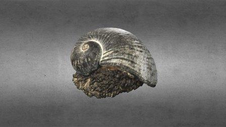 Scaly Gastropod