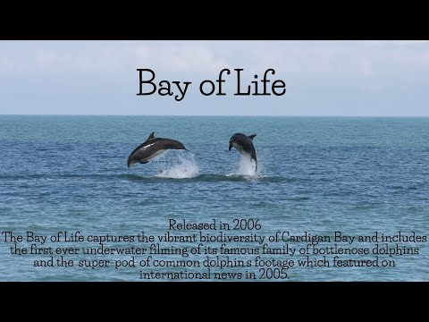 Bay of Life: Sealife of Cardigan Bay