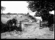 Offa's Dyke and Wat's Dyke