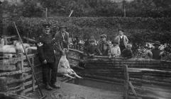 Sheep Dipping in New Radnor c1910