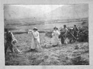 Women (and men) in the harvest at Pen Isa'r Cwm