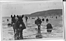 Donkeys on Ferrryside beach