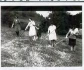 Photograph of haymaking, 1929