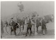 Hay Gathering. Bagillt, 1921