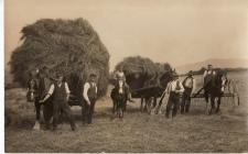 Photograph of haymaking