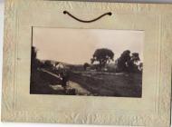 Postcard photograph, Llangoed