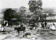 Parcyneithw Farm.