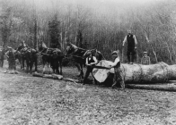 Forestry was another important local industry...
