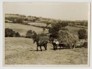 Haycart at Yr Hendre , Blaenpennal
