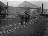 Colliery horse returning to Big Pit surface...
