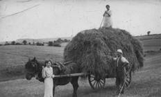 Llangollen. Haymaking - Bache Canol farm