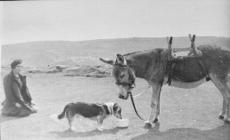 Llangollen. The Dinas Brn donkey