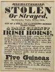 Poster recording the theft of a horse,...