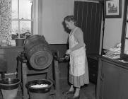 Churning butter, 31 March 1955
