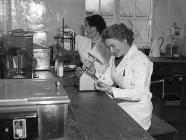 Hufenfa Rhydygwystyl, 31 Mawrth 1955