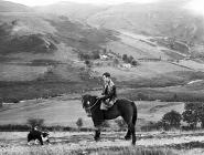 A man on horseback at Pantclwyde, 1955