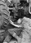 Fferm datws ym Mhenrhyn Gŵyr, 1 Gorffennaf 1951
