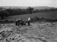A Gower potato farm, 1 July 1951