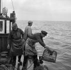 Lobster fishing at Aber-soch, 5 July 1956