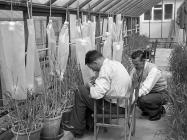 The Welsh Plant Breeding Station, Plas...