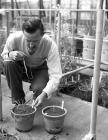 The Welsh Plant Breeding Station, Plas...