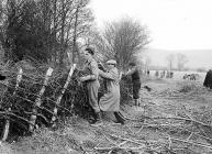 Hedging competition at Builth Wells, 1 February...