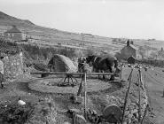 Farming in the old-fashioned method, 1 July 1960