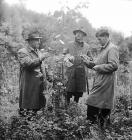 Planting trees in the Newtown area, 3 October 1953