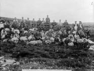 Sheep shearing, Nantglyn, c. 1885