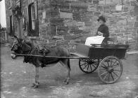 Mrs Oliver in a cart drawn by a donkey, c. 1885
