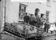 Narberth sheep market, c. 1885