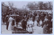 Cattle Fair, Haverfordwest, c. 1900