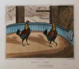 Cockfighting Prints: Plate 1, 'A Start'