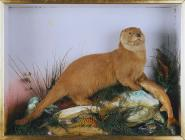 Otter and trout: taxidermy by J. Hutchings,...
